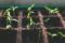 Plante si alimente care ajuta memoria