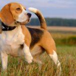 Descopera care sunt cele mai jucause rase de caini