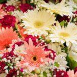 florarie-online (3)